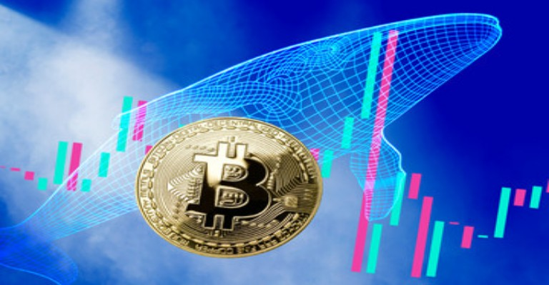 Bitcoin Whales Accumulated More Coins Post-Halving
